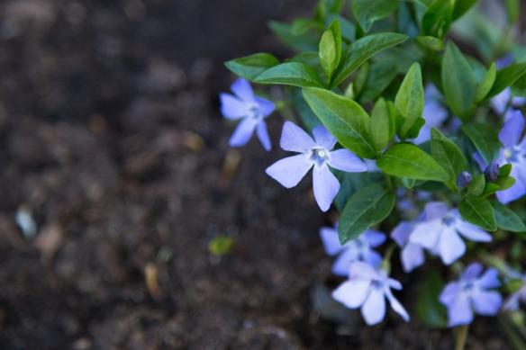 20160512_blommor-3